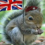 brit squirrel