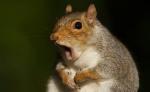 squirrel squatter